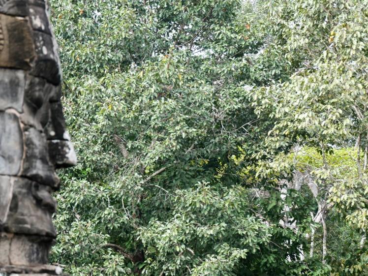 Carved heads, Bayon Temple, Angkor Wat