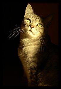 Pet-sitting cat