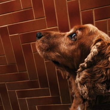 Pet-sitting spaniel dog